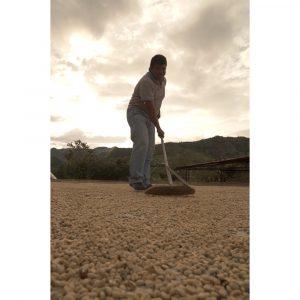 Roasting Plant Colombia Sugar Cane Decaf